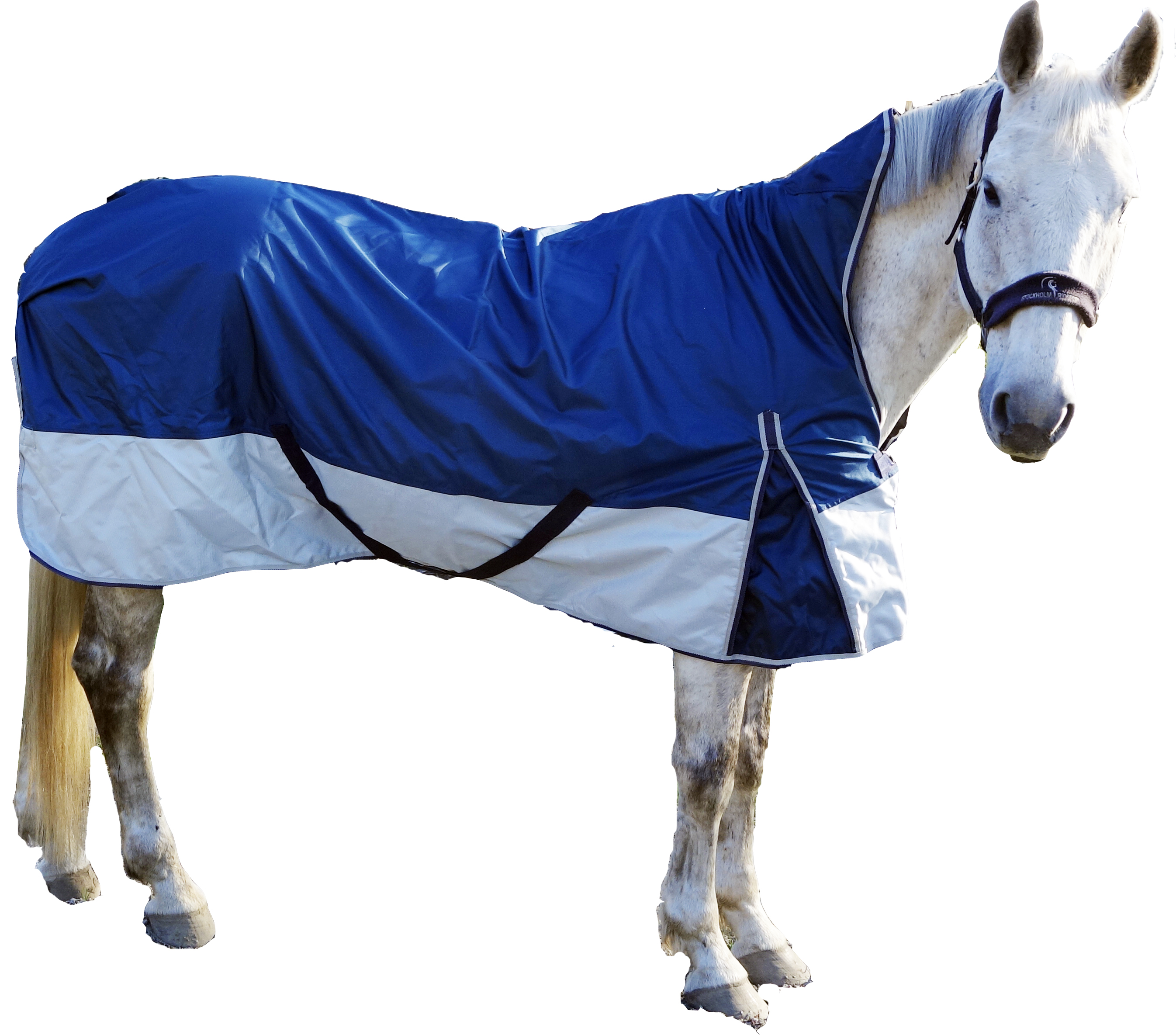 Billiga regntäcken häst